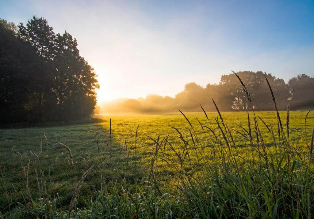 Elbwiesen am frühen Morgen